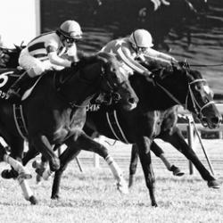 [水戸正晴の競馬予想ブログ]サンスポ、水戸正晴の万券を生む血統論「ダークシャドウの好走必至」